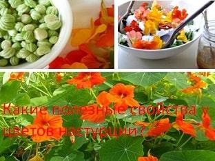 Какие полезные свойства у цветов настурции?
