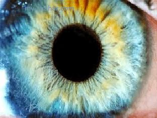 Как лечить глазные болезни народными средствами?