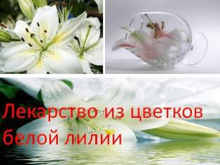 Лекарство из цветков белой лилии