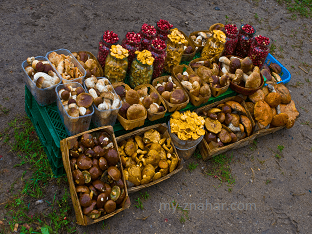 Какие лечебные свойства у грибов?