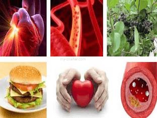 Народные средства при лечении и профилактики aтеросклерозa