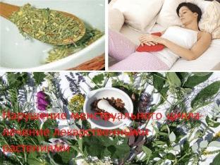 Нарушение менструального цикла — лечение лекарственными растениями