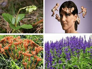Как победить бесплодие и забеременеть, какие травы помогут?