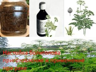 Настойка болиголова приготовление и применение при раке
