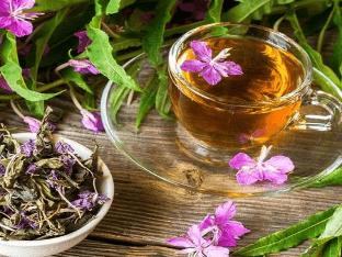 О пользе копорского чая для мужчин и женщин