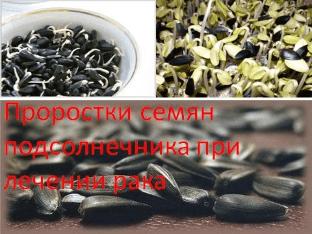 Проростки семян подсолнечника при лечении рака