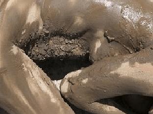 Чем полезна грязь, в чем ее уникальность