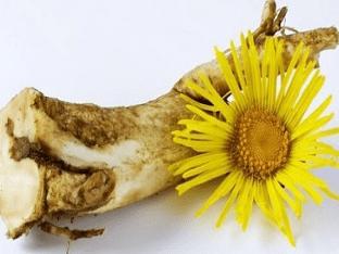 Какие болезни лечит корень девясила, применение