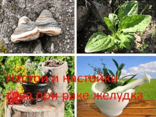 Настои и настойки трав при раке желудка