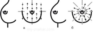 Профилактические осмотры молочных желез
