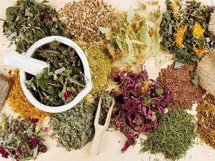 Какие лекарственные растения применяют для лечения простатита