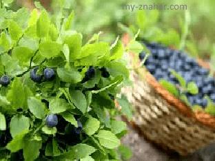 Какая польза у листьев черники