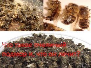 Что такое пчелиный подмор и, как он лечит