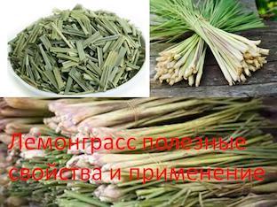 Лемонграсс полезные свойства и применение