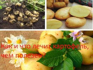 Как и что лечит картофель, чем полезен