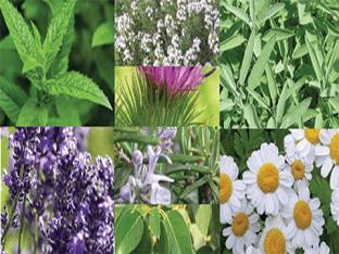 Выращивание лекарственных трав