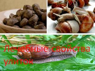 Лечебные свойства улиток