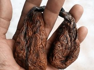 Бобровая струя - от каких болезней и как принимать?