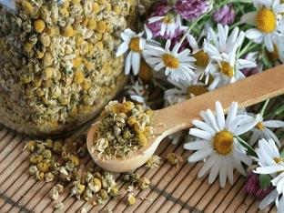 Польза и вред чая из ромашки, способы заварки ромашкового чая