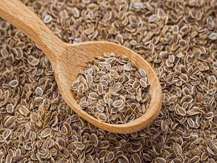 Семена укропа: как принимать в лечебных целях и где купить?