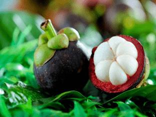 Фрукт мангостин: что это и как его есть?