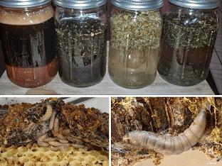Как сделать пчелиную настойку огнёвки в домашних условиях?