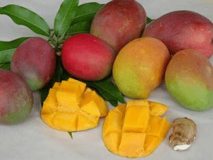 Какие польза и свойства фрукта манго для организма?