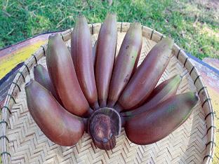 Красные бананы: отличие от желтых, как их есть, что с ними делать?