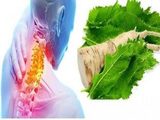 Как применять листья хрена при остеохондрозе