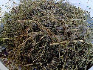 Чабрец — трава богов: от чего она