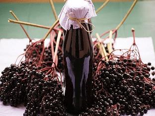 Как приготовить настойку из бузины?