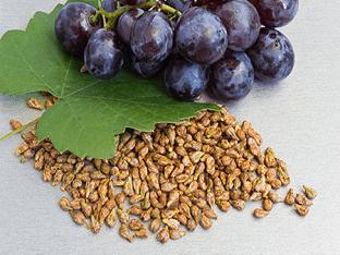 В чем польза виноградных косточек?