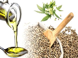 Семена конопли и конопляное масло - применение и свойства