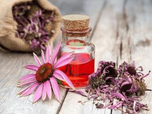 Эхинацея для иммунитета: как применять, рецепты настоек и отваров