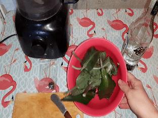 Как приготовить настойку каланхоэ?