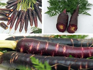 Чем полезна черная морковь, ее полезные свойства