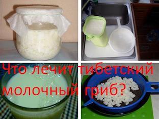 Что лечит тибетский молочный гриб