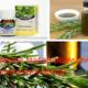 Эфирное масло розмарина при лечении болей