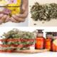Какие лекарственные травы и травяные сборы помогают при дерматите?