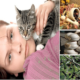 Какие народные средства применяют для лечения токсоплазмоза?