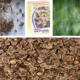 В чем польза семян укропа для здоровья человека?