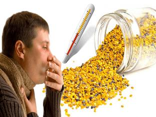 Как правильно применять прополис для лечения кашля