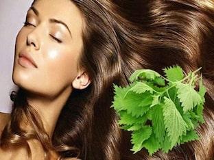 Какая польза отвара крапивы для волос, применение