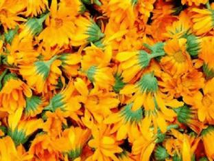 Календула - чем полезны цветки Календулы