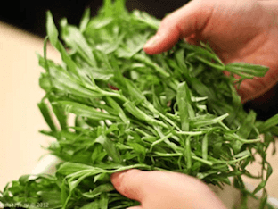 Чем полезна трава Тархун