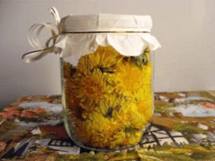 Рецепты настоек из одуванчиков, их польза и применение