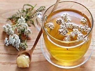 Чем полезен чай из тысячелистника обыкновенного и его побочные эффекты